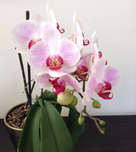 OrchidAfter