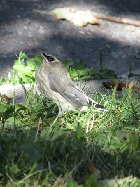 rescue bird sparrow