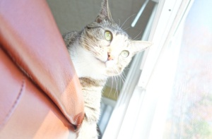 Front view of sunny Luna looking out through window