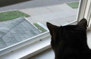 Luna looking at 2 birds through window