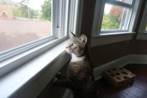 Luna peeking out over window sill