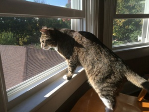 Luna standing on window sill and chair looking out