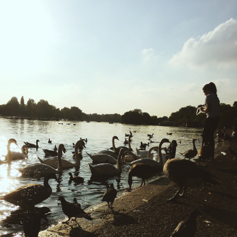 Girl feeding swans in Hyde Park, London Photo by Sarah Bell