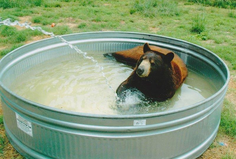 blt bear lion tiger noah's ark rescue (4)