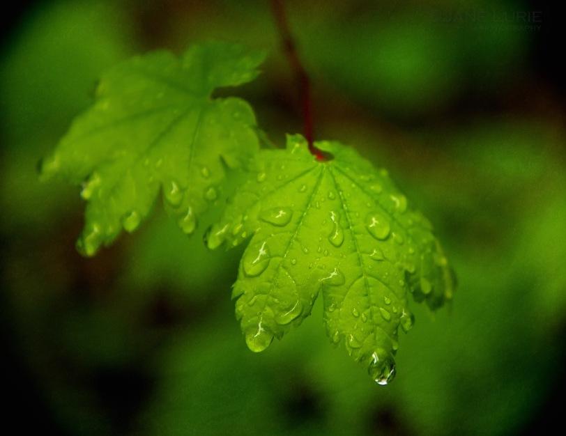 Nature, Rain, Close-up, Macro, Nikon