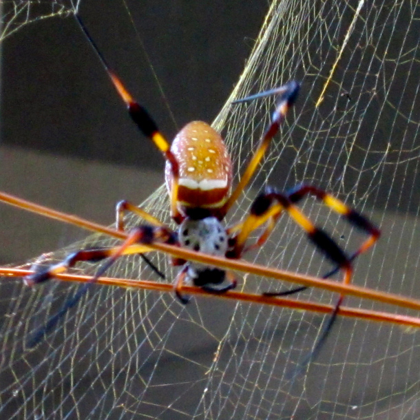 Our Spider