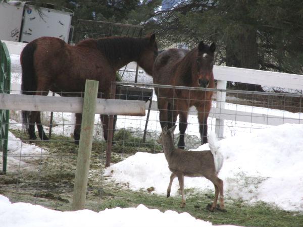 deer and horses