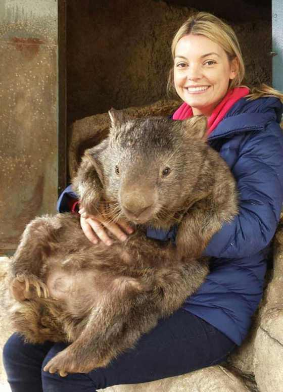 This-here-is-Patrick-the-oldest-and-largest-living-wombat-in-the-world4