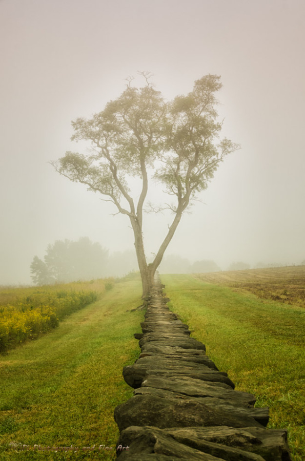 Calming Morning is a landscape photograph of a historic stone wall and a single tree standing in the middle of a field on a foggy morning. Photograph was created on the grounds of Brandywine Creek State park located in Wilmington Delaware.