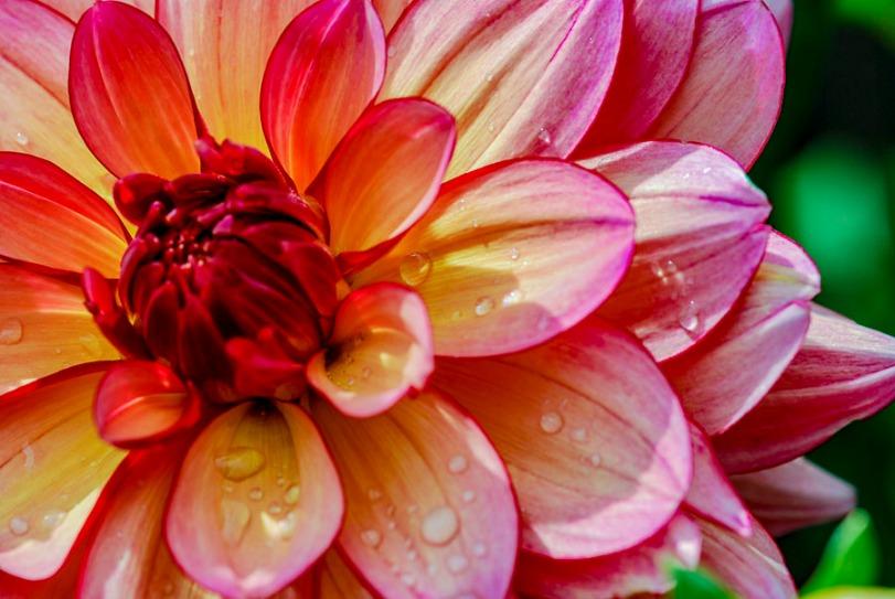 102115flower_1
