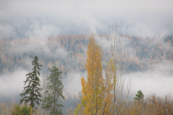 fall colors whitefish