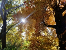 trees-sunshine
