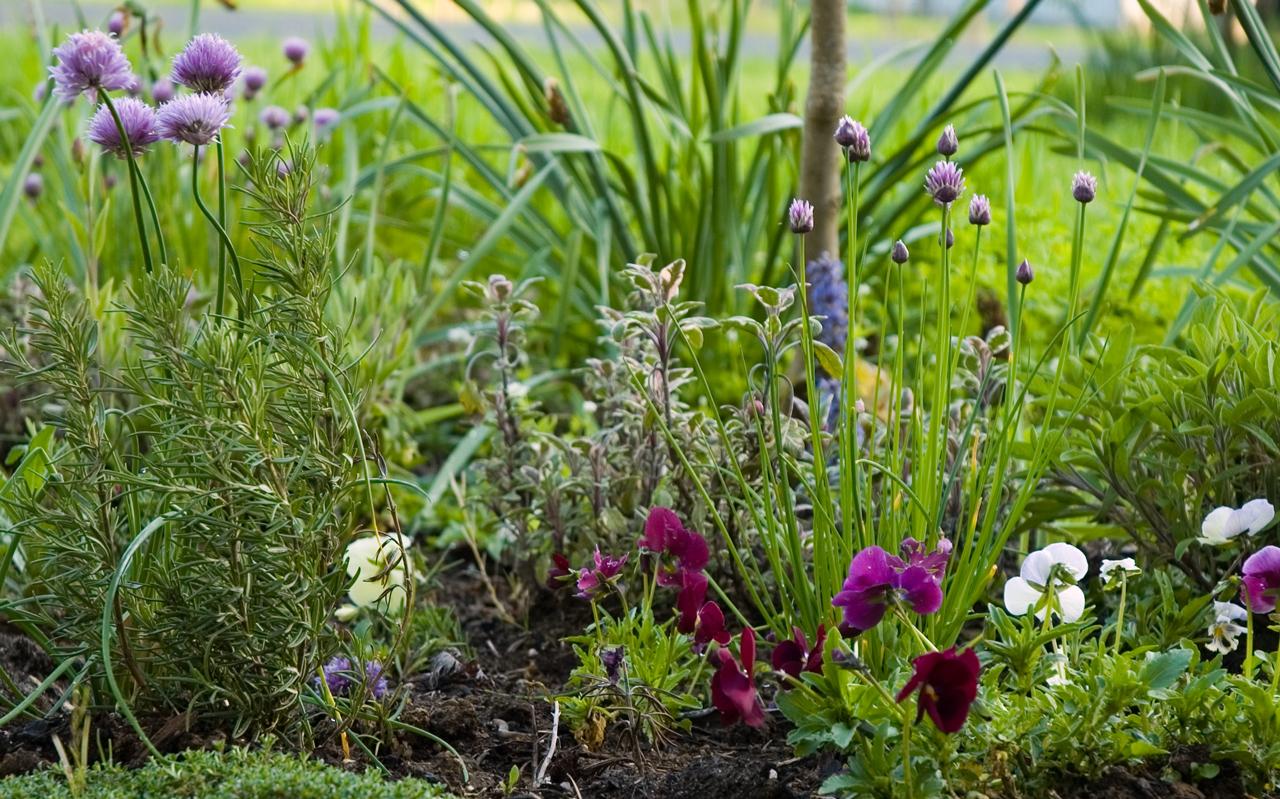 Your Medicinal Herb Garden